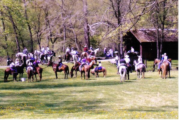 subridgehorses.jpg