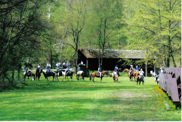 subridgehorses2.jpg